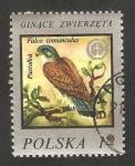 Stamps Poland -  protección de la naturaleza, un halcón