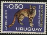 Stamps America - Uruguay -  Fauna uruguaya. Felis geoffroyi paraguae. Gato montés. 1975 0,50 nuevos pesos