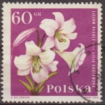 Sellos de Europa - Polonia -  Polonia 1964 Scott 1282 Sello Flora Flor Lirio Lilium Regale Usado Polska Poland Polen Pologne