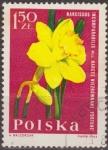 Stamps Poland -  Polonia 1964 Scott 1285 Sello Flora Flor Narciso Narcissus Incomparabilis Usado Polska Poland Polen