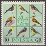 Sellos de Europa - Polonia -  Polonia 1966 Scott 1452 Sello Nuevo Fauna Pajaros Aves Polska Poland Polen Pologne
