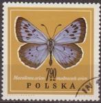 Sellos de Europa - Polonia -  Polonia 1967 Scott 1550 Sello Nuevo Mariposa Butterflies Maculinea Arion Matasellos favor Preobliter