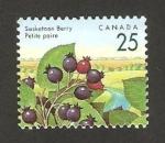 Stamps Canada -  peras pequeñas