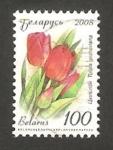 Stamps : Europe : Belarus :  Tulipán, flor de jardín
