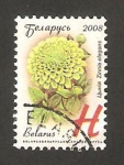 Stamps Europe - Belarus -  629 - zinnia, flor de jardín