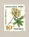 Sellos de Europa - Polonia -  Planta Azalea pontica