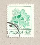 Sellos de Europa - Polonia -  Planta