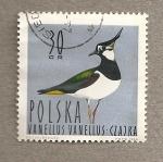 Sellos de Europa - Polonia -  Ave Vanellus vanellu