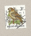 Sellos de Europa - Bélgica -  Pájaro Pico grande
