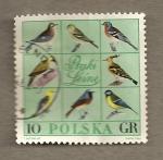 Sellos de Europa - Polonia -  Aves diversas