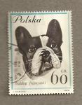Sellos de Europa - Polonia -  Perro raza bulldog
