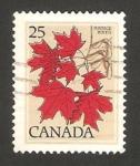 Stamps America - Canada -  hojas del árbol azúcar de arce