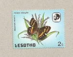 Stamps Lesotho -  Mariposa Meneris tulbaghia