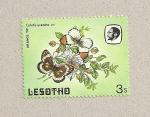 Stamps Africa - Lesotho -  Mariposa Colotis evenina