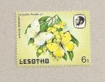 Stamps Africa - Lesotho -  Mariposa Catopsilia florella