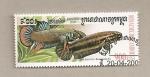 Stamps Asia - Cambodia -  Pez Betta imbellis