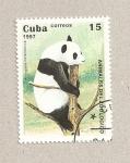 Stamps Cuba -  Oso panda