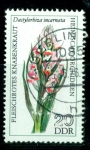 Stamps : Europe : Germany :  Flores. Orquídeas