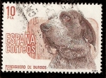 Sellos de Europa - España -  Perros de raza española, Perdiguero de Burgos