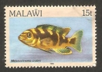 Sellos del Mundo : Africa : Malawi : pez melanochromis crabo