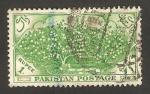 Stamps : Asia : Pakistan :  plantación de algodón