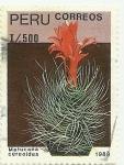 Sellos de America - Perú -  Cactus del Perú