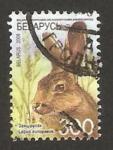 Stamps : Europe : Belarus :  fauna salvaje, una liebre