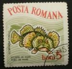 Stamps Romania -  escorpion de mar