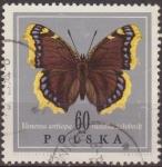 Sellos de Europa - Polonia -  Polonia 1967 Scott 1545 Sello Mariposa Butterflies Vanessa Antiopa Usado Polska Poland Polen Pologne