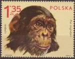 Sellos de Europa - Polonia -  Polonia 1972 Scott 1891 Sello Nuevo Fauna Animales de Zoo Chimpance Pan Troglodytes Polska Poland