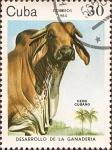 Sellos de America - Cuba -  Desarrollo de la Ganader�a: Ceb� cubano.