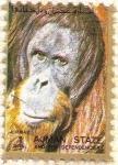Stamps : Asia : United_Arab_Emirates :  AJMAN - Orangután