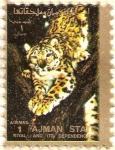 Sellos de Asia - Emiratos Árabes Unidos -  AJMAN - Leopardo