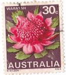 Stamps : Oceania : Australia :  flora
