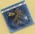 Stamps Russia -  Anémona sulcata - ortiguilla