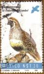 Stamps America - Mexico -  Codorniz de Gambel