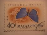 Sellos del Mundo : Europa : Hungría : lysandra hylas