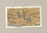 Sellos de America - Canadá -  Pavos