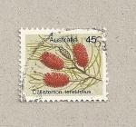 Sellos de Oceania - Australia -  Callistemon teretifolius