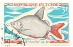 Sellos del Mundo : Africa : Chad : Pez - Citharinus latus