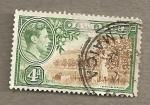 Stamps America - Jamaica -  Huerto de citricos