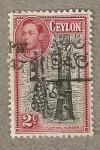 Stamps Asia - Sri Lanka -  Arbol caucho
