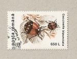 Sellos de Europa - Rumania -  Coccinella bipunctata