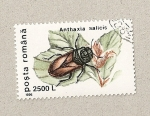 Stamps Romania -  Anthaxia salicia