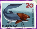 Stamps : Europe : Poland :  Dinichthys