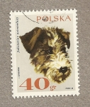 Stamps Poland -  Perro raza Terrier ostrowlosy