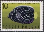 Sellos de Europa - Polonia -  PECES EXÓTICOS