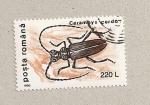 Stamps Romania -  Cerambyx cerdo
