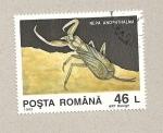 Stamps Romania -  Nepa anophthalma