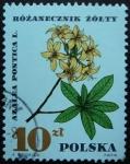Stamps Poland -  Azalea / Azalea pontica